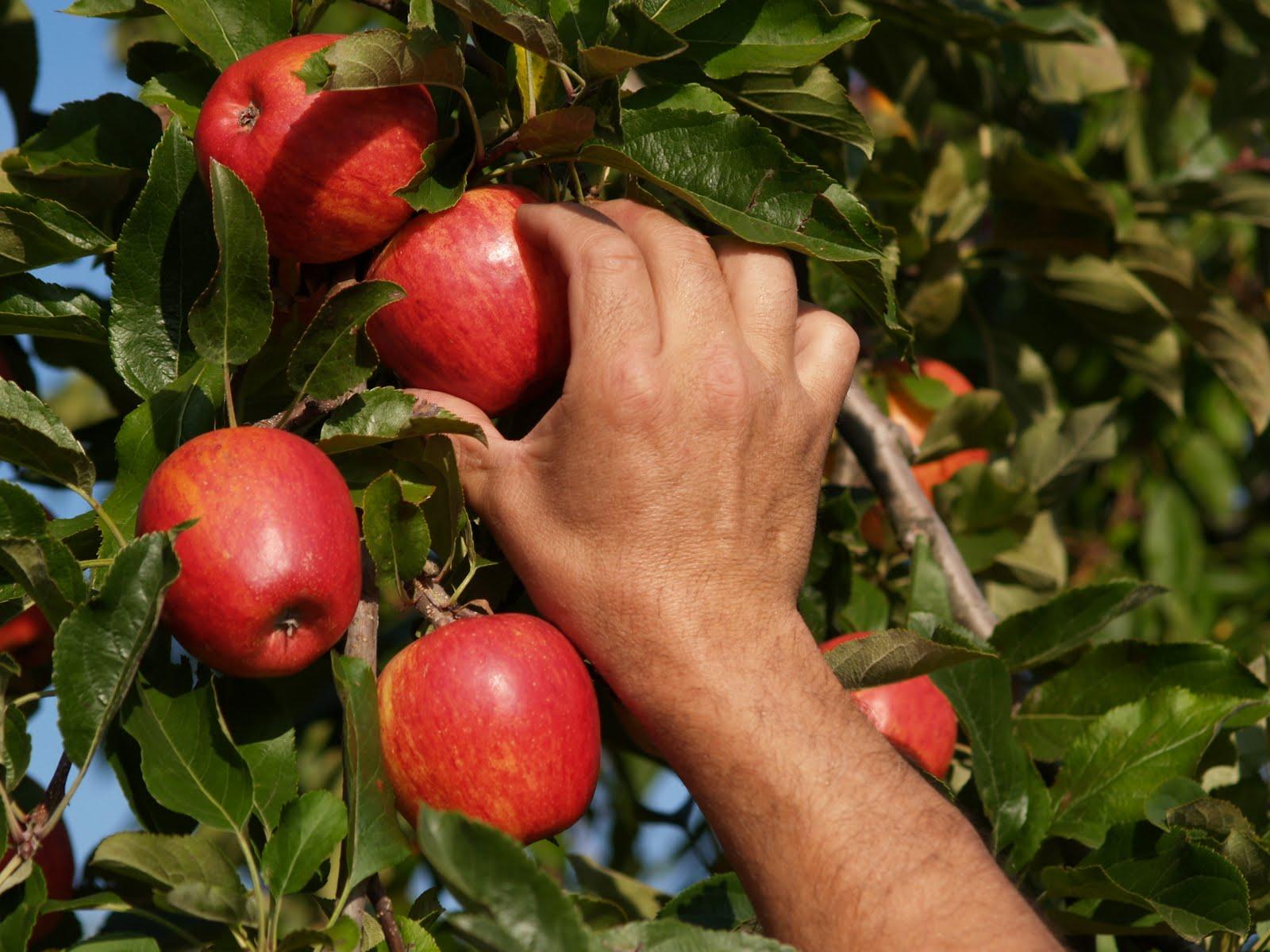 agricultura-exportación. Productos hortofrutículas. Agromay
